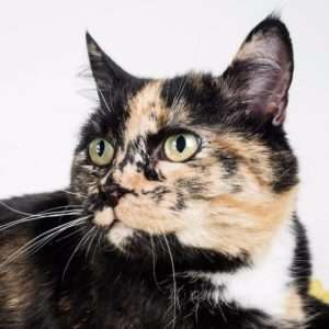 vaccinate a rescued adult cat