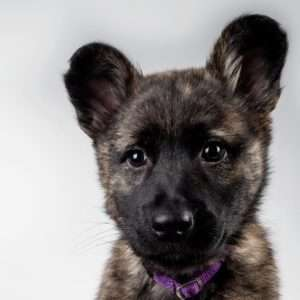 Vaccinate a rescued puppy