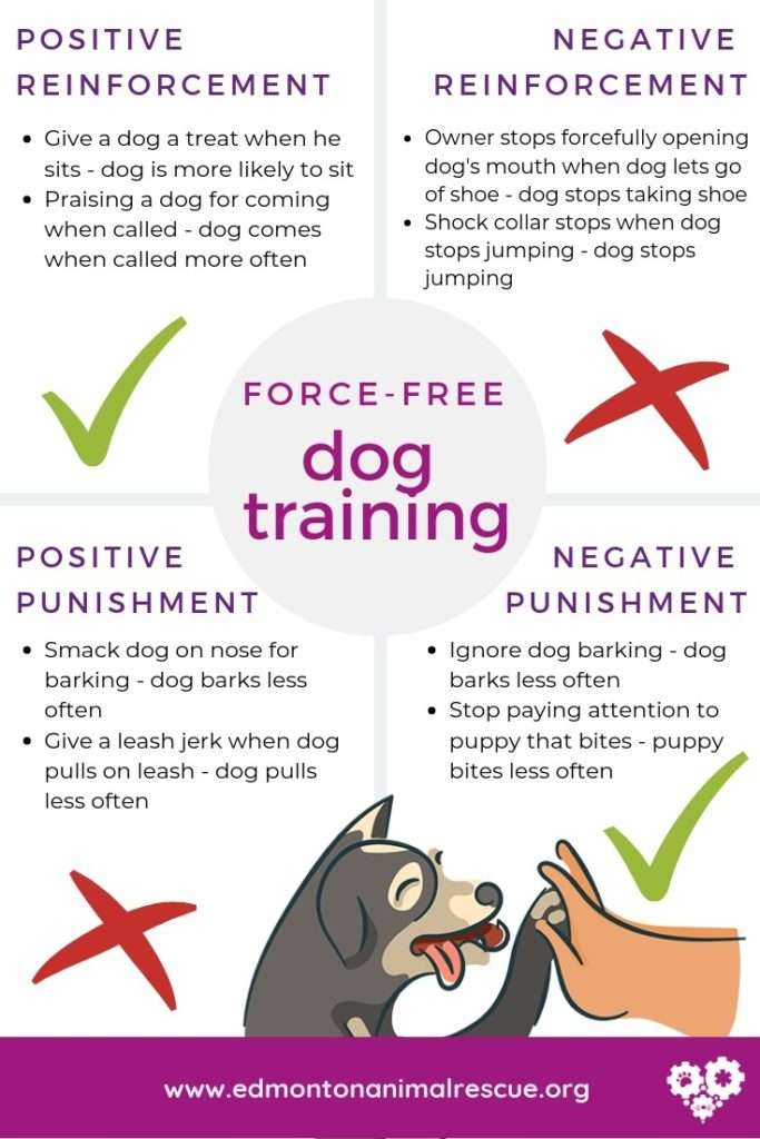 Force free dog training examples