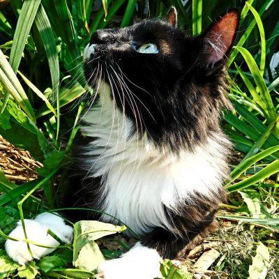 Adopt a black cat in Edmonton - Abel
