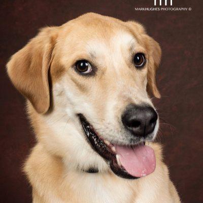 adopt a dog - Idalee