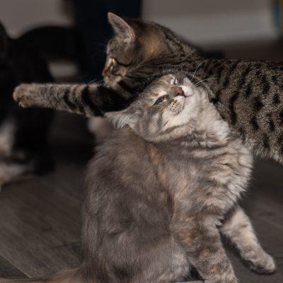 Adopt a cat Sugar and Spice